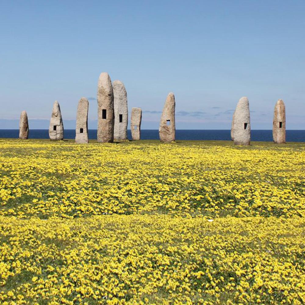 Eine Landschaft mit gelben Blumen mit Felsbrocken im Hintergrund.